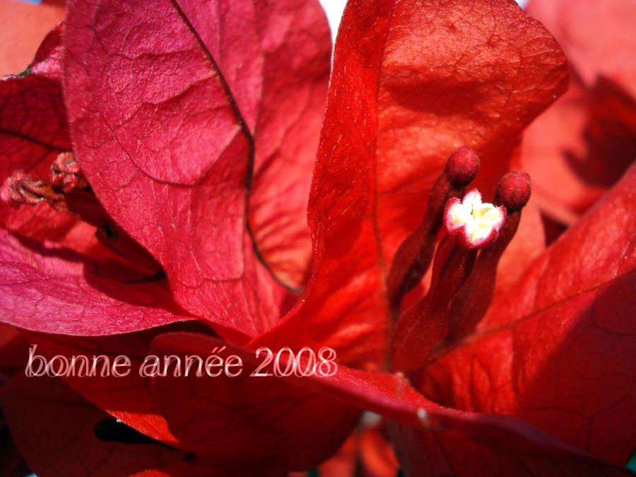 voeux2008.jpg